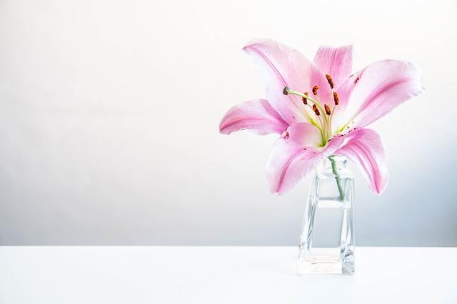 flowers-2208020_640