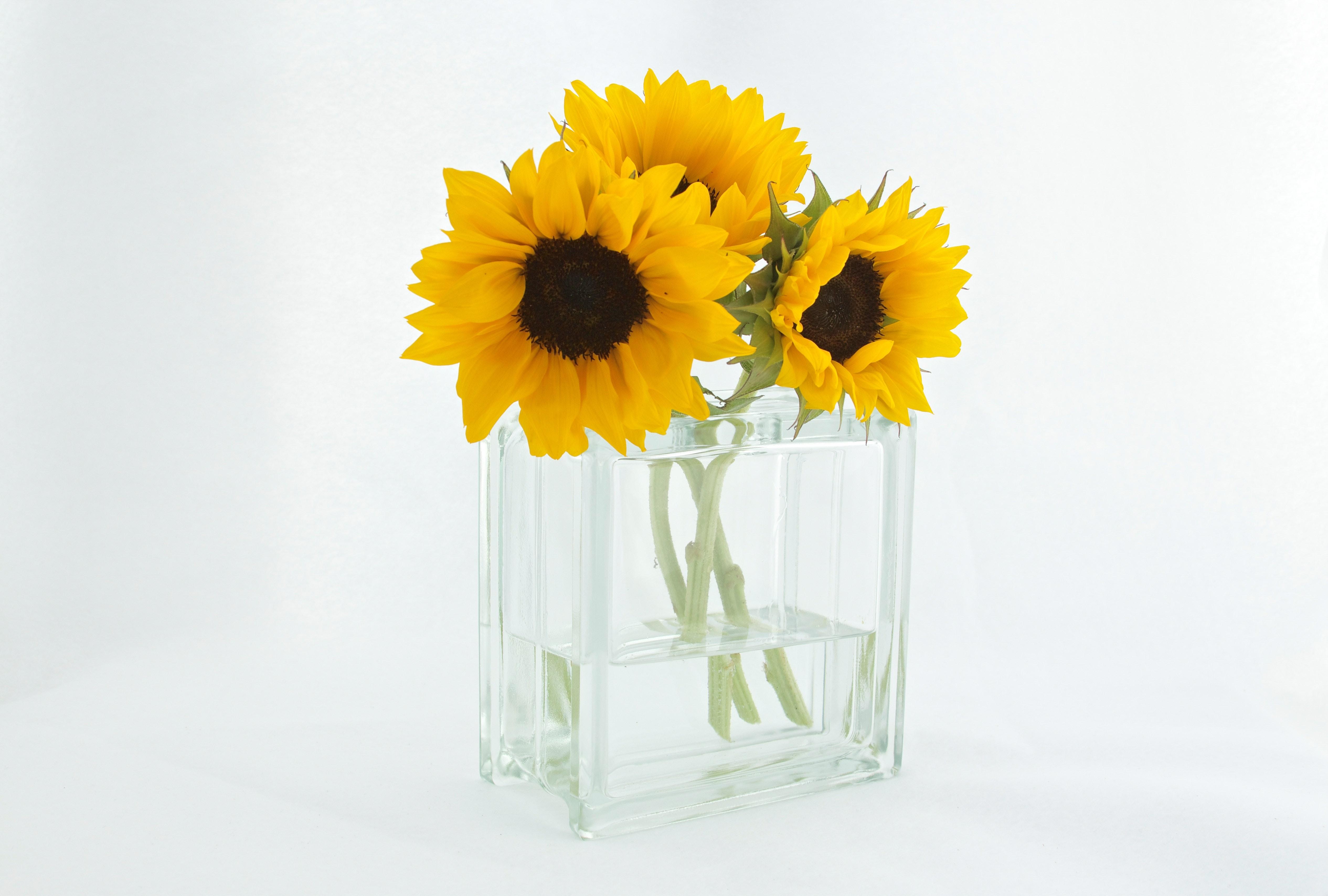 flowers-sunflowers-vase-12581